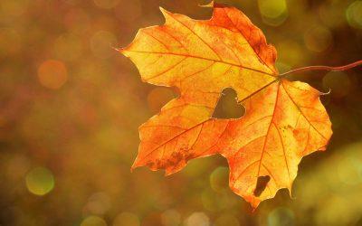 MŠ bude během podzimních prázdnin uzavřena